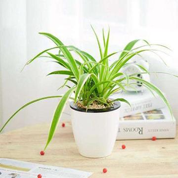 常见水培植物的养护方法