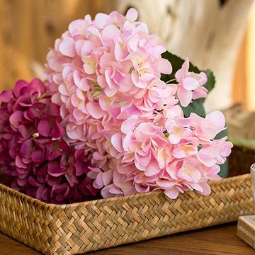 快来学习鲜花养护的知识啦,生活中常见的几种花材养护方法