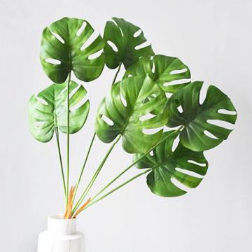 室内能吸收甲醛及有毒物质的绿植有哪些?