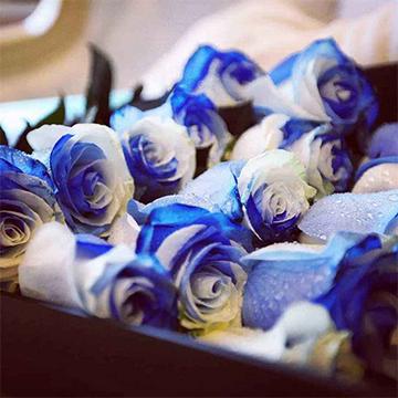 厄瓜多尔天空玫瑰花
