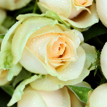 北京顺义区给男朋友过生日买花可以送上门吗?