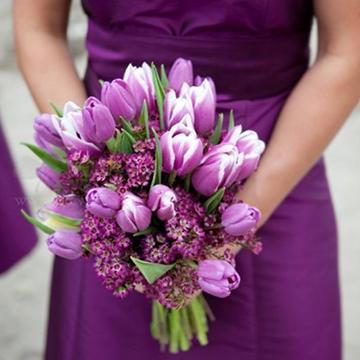 紫色郁金香