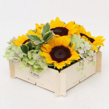 6朵向日葵花