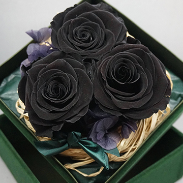 黑玫瑰图片