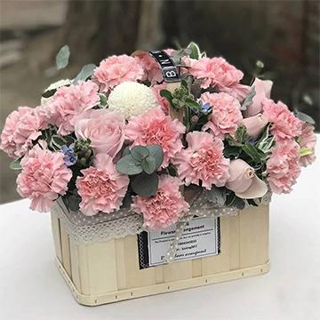 粉色康乃馨图片