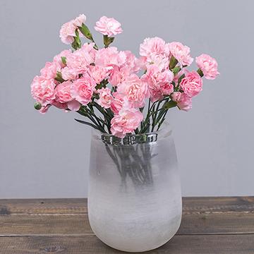 粉色康乃馨瓶花