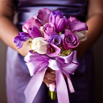 紫色郁金香花
