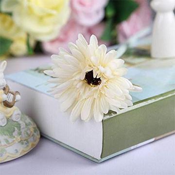 白色非洲菊