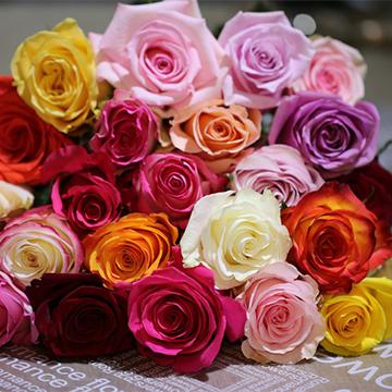 22朵玫瑰花