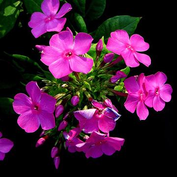 适合在秋季养的花卉有哪些呢?