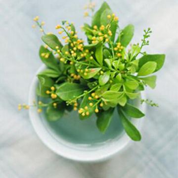 室内养殖盆花的春季养花知识