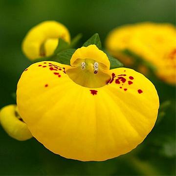 适合在春季养的花卉有哪些?