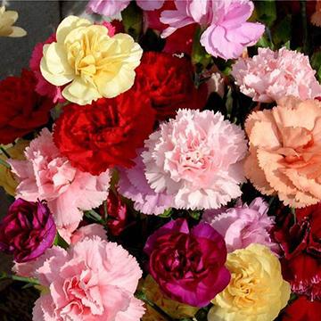 上海市黄浦区买花去哪家花店好