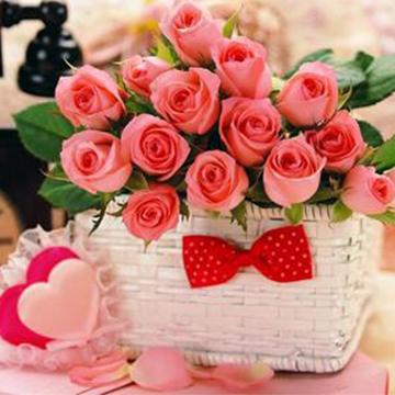 16朵粉玫瑰