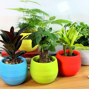 养花常见病虫害及防治方法