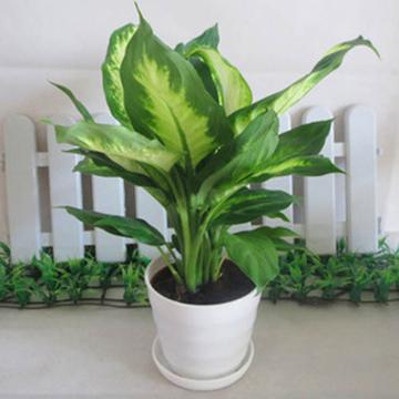 生活中的各种绿植的养护方法