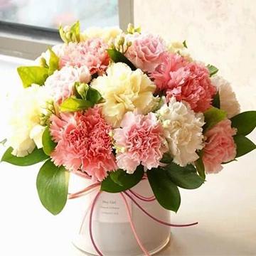 11朵康乃馨