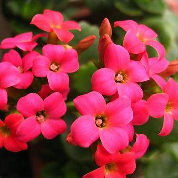 懒人春季适合养哪些花