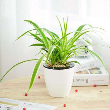 常見水培植物的養護方法