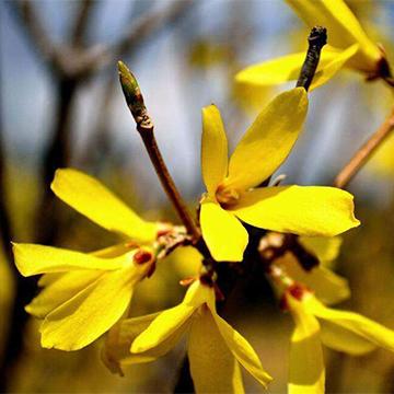 常见的外形相似的植物对比