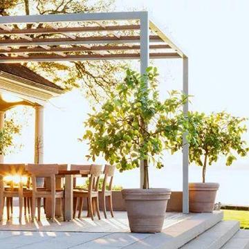 庭院花卉的养殖和搭配方法