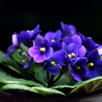 养花浇水的注意事项有哪些呢
