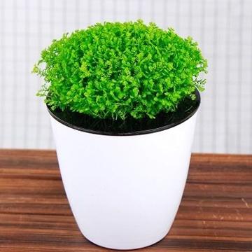 春季可以给花卉盆栽换盆吗