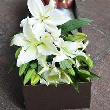 6朵百合花