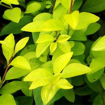 觀葉植物的正確養護方法