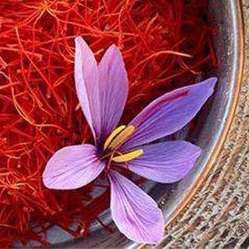藏红花的养殖方法