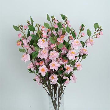 山楂花的花语