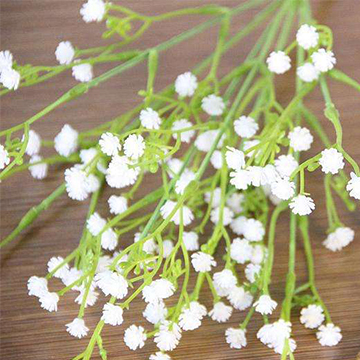 白色满天星的花语