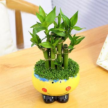 盆栽竹子的养殖方法
