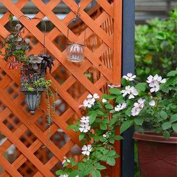 阳台养花技巧
