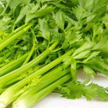 水芹菜的养殖方法