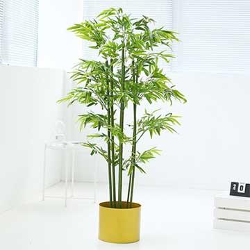 竹子的养殖方法