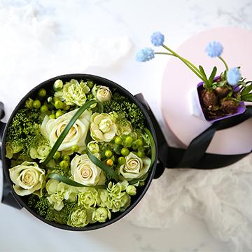6朵白玫瑰