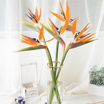 鹤望兰瓶插花