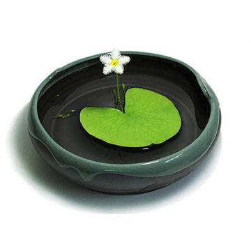 一叶莲的养殖方法