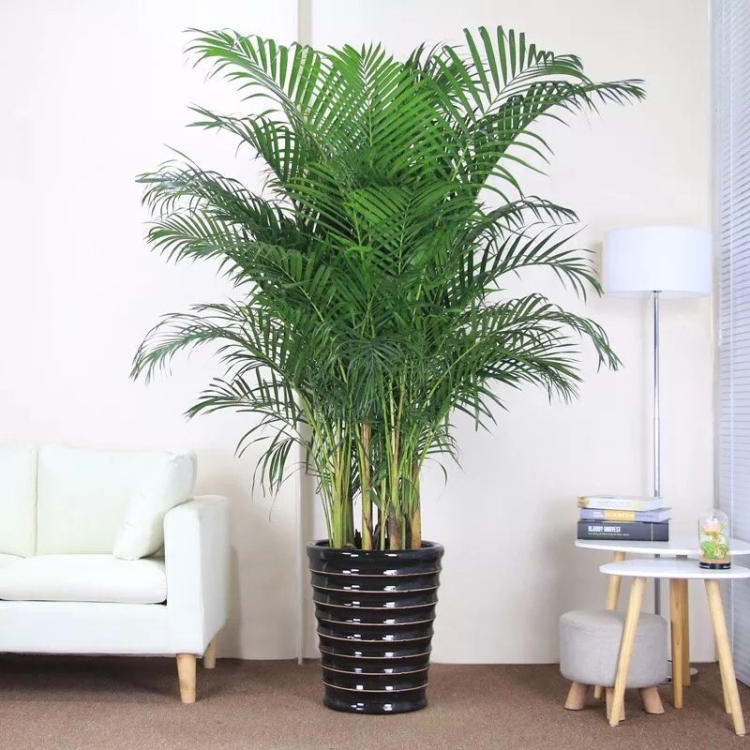 雾霾天清除污染的最佳十大室内植物