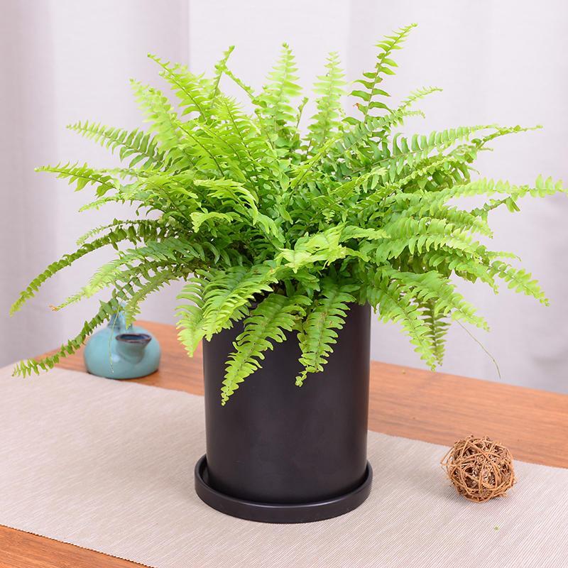 雾霾天清除污染的*佳十大室内植物