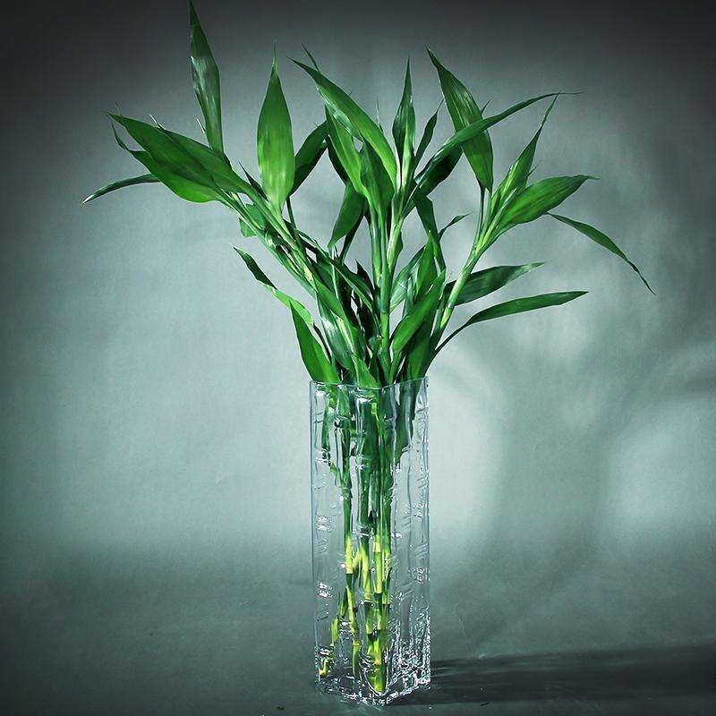 富贵竹 5种可种在室内里的喜阴植物,背光咱也不怕啦
