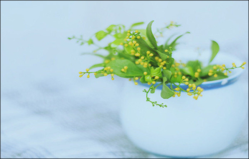 米兰花的品种有多少?都代表什么意思
